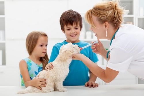 Vaccinations McMurray, PA